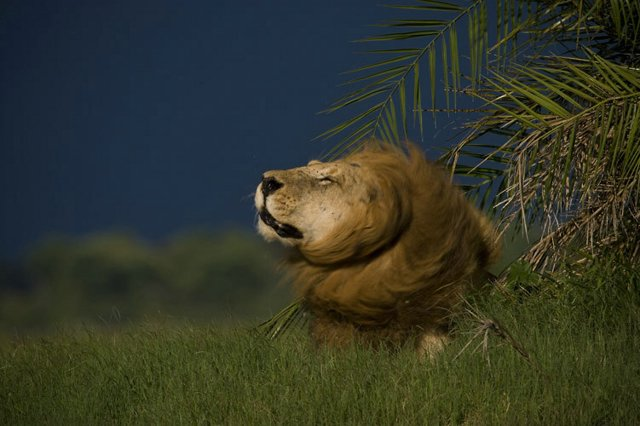 Africa Animal pictures