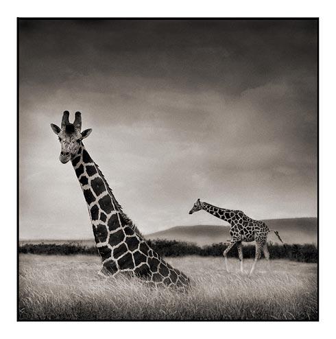 African wildlife photos