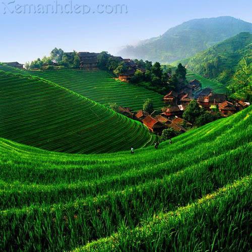 Agriculture photos