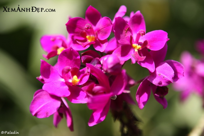 amazing flower photos  xemanhdep photosawesome pictures gallery, Natural flower