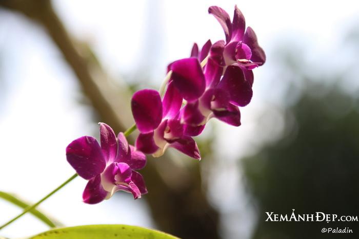 Amazing flower photos