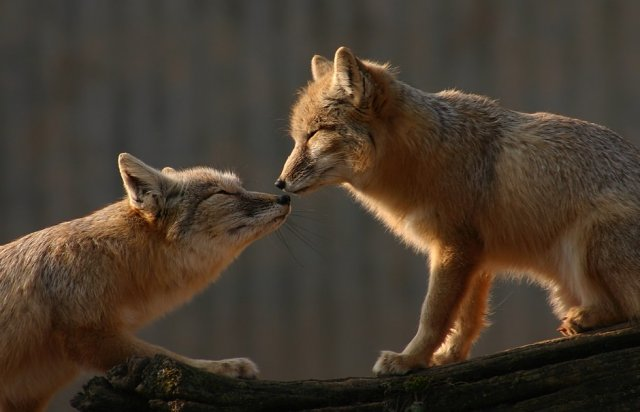 Animal in love photos