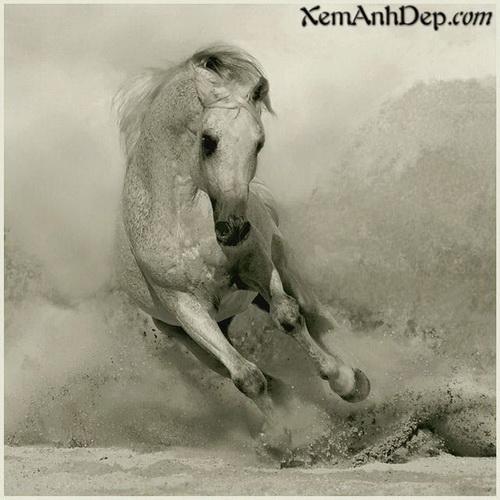 Animal world photos - Best animal images
