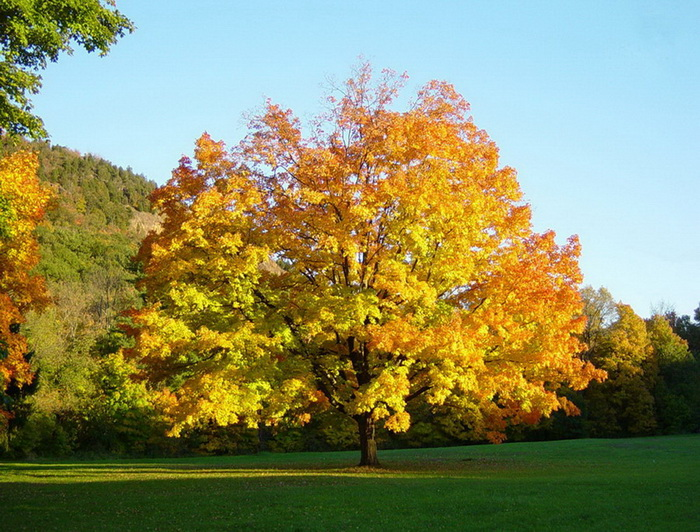 awesome-sunshine-trees pictures