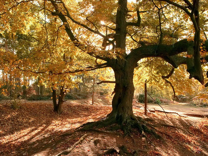 awesome-tree pictures