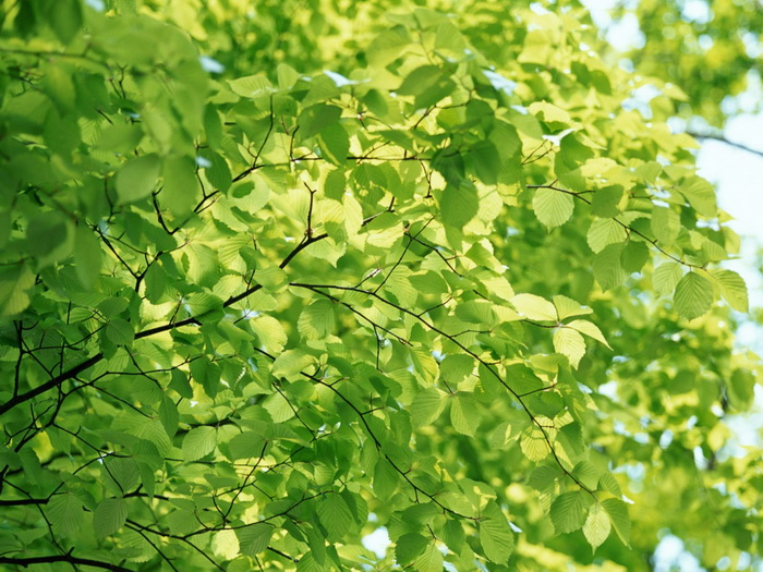 beautiful-leaf19 - Lunhaw - Photos Unlimited