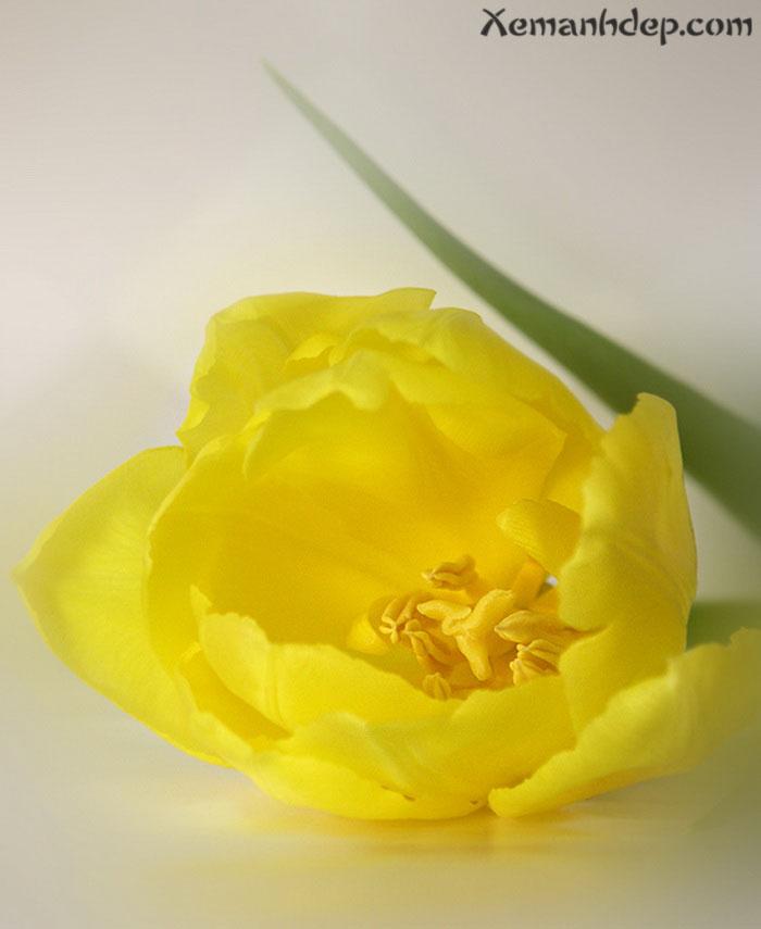 Beautiful flower photos