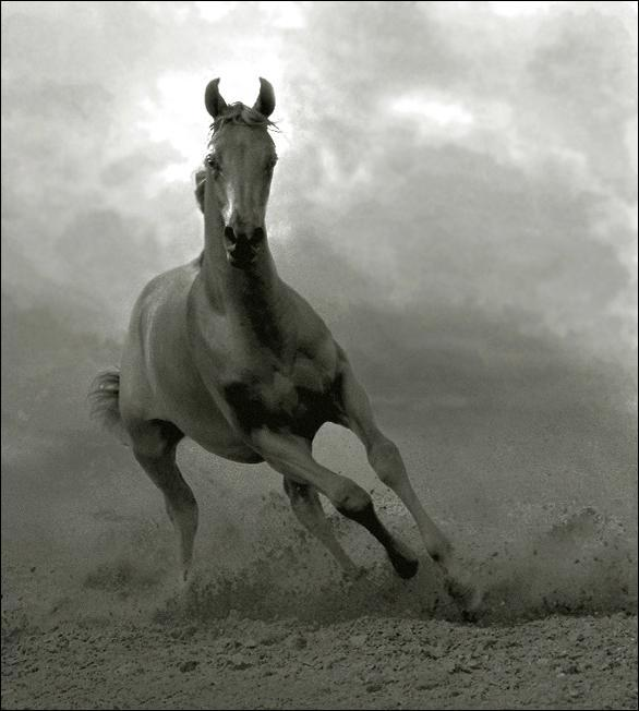 Amazing Horses Photos