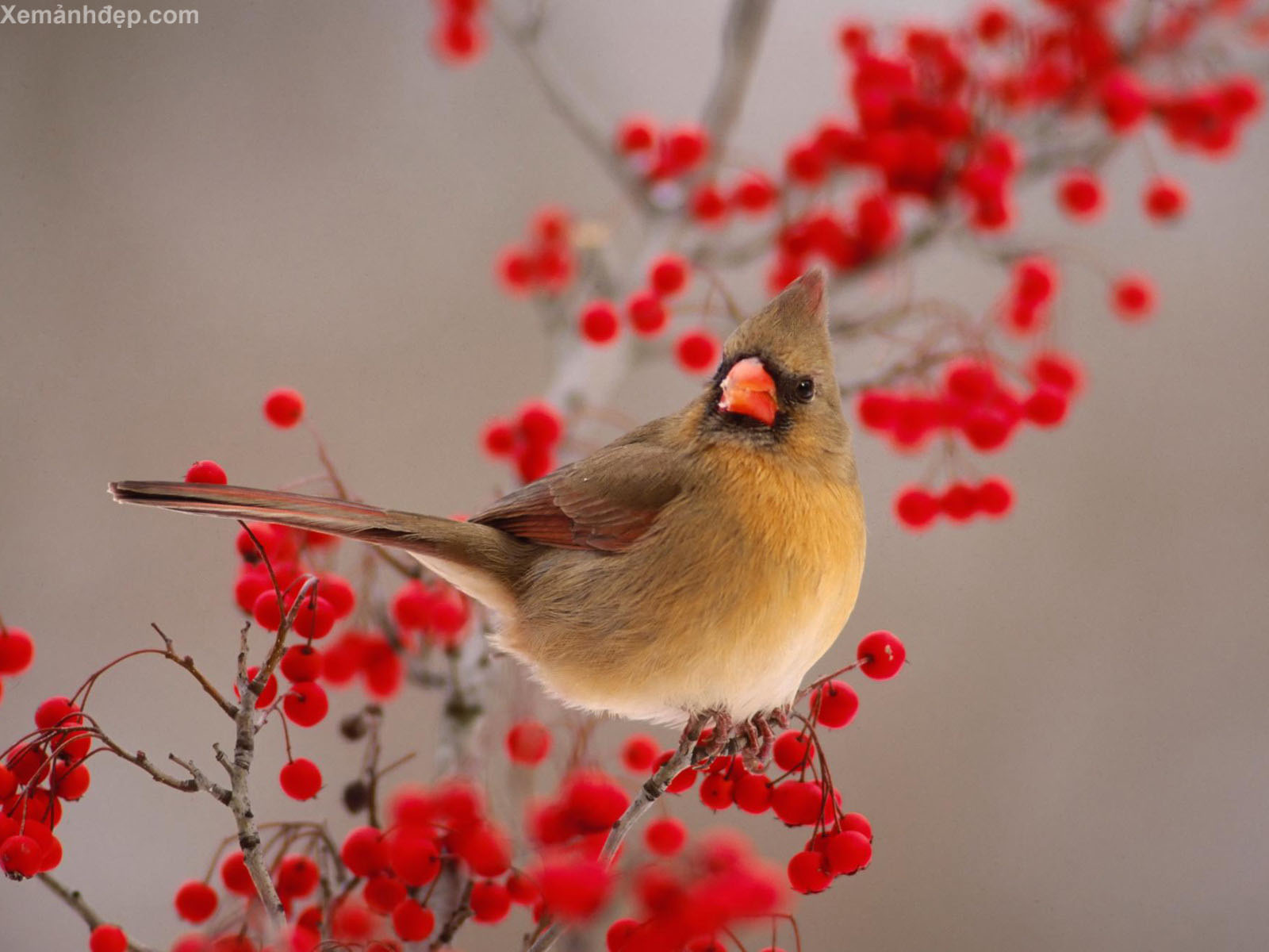 Beautiful bird photos