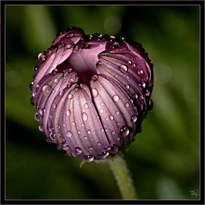 blue-violet-flower pictures