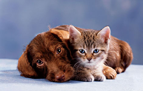 Dogscatswallpaper on Cat And Dog Photos   Xemanhdep Photos Awesome Pictures Gallery