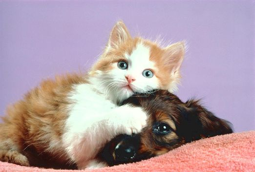 Cat and dog photos | Xemanhdep Photos-Awesome Pictures Gallery