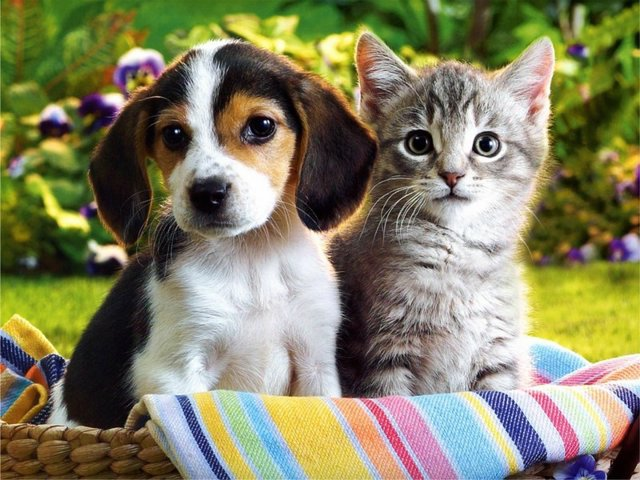 cat and dog photos xemanhdep photos awesome pictures gallery cat and 640x480