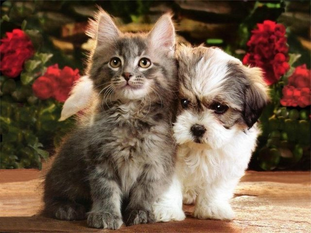 pictures of puppies and kittens. kittens, photos, puppies,