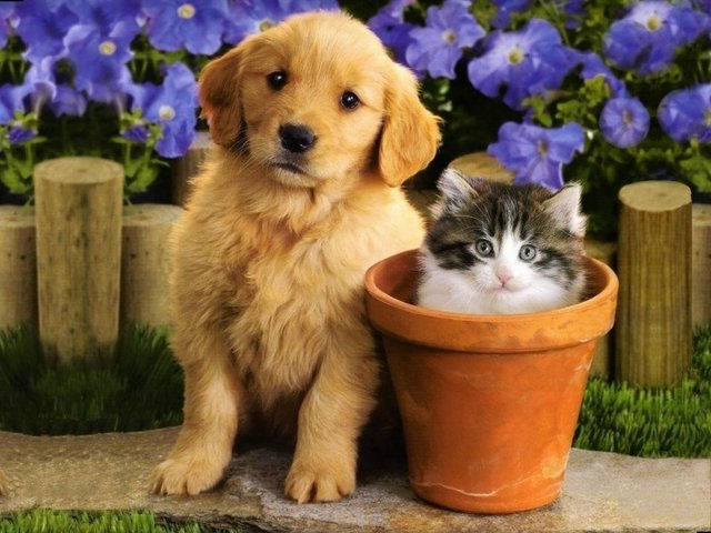 Cat and dog photos