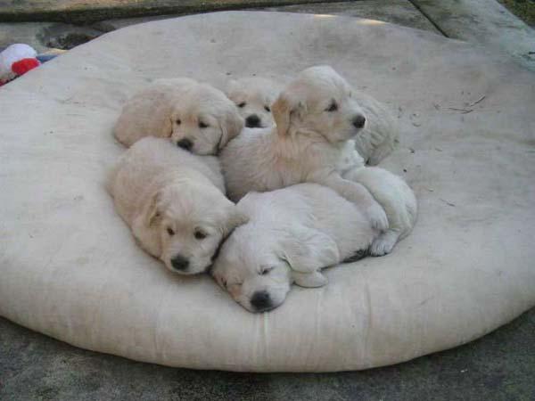 Cute Puppies Photos