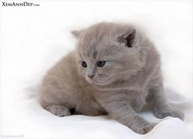 Cute cats photos