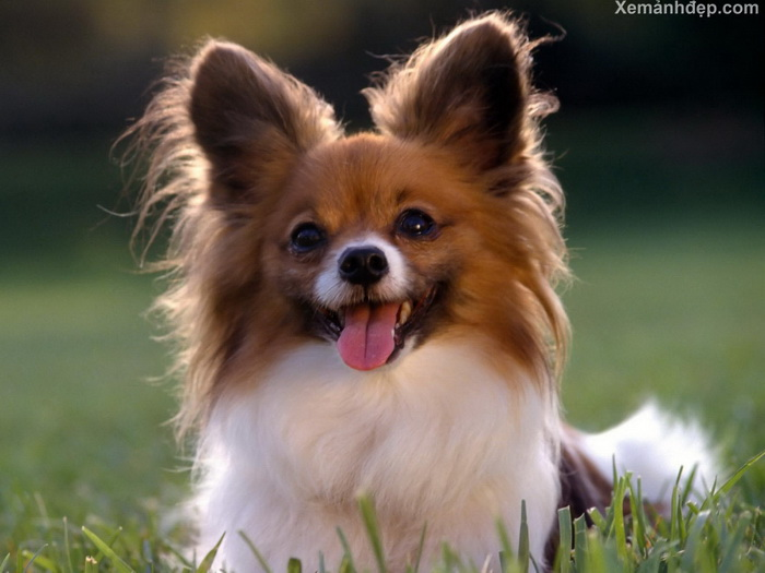 Cute dogs photos