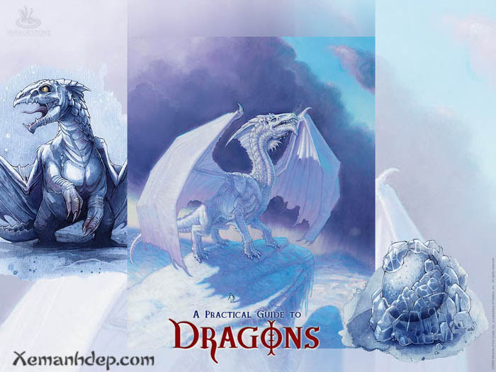 Dragon photos