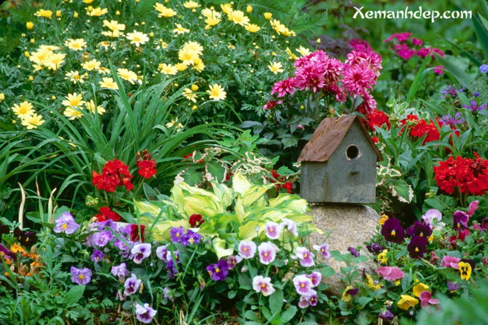 Beautiful garden photos