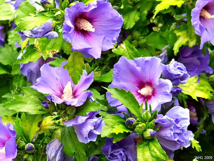 Click here to join us to get Beautiful Flower and Nature Photos