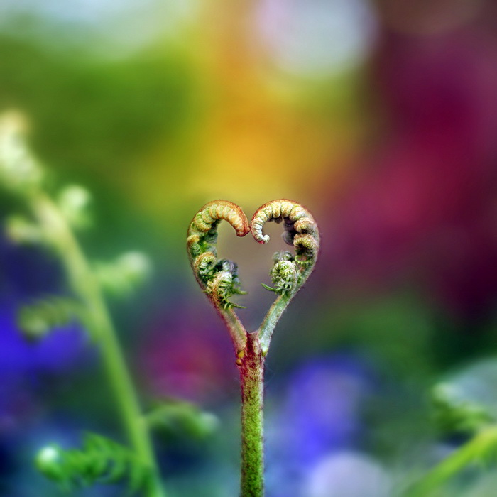 Heart Images In Nature nature heart pictures