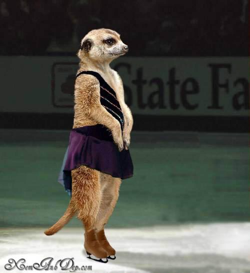 Olympic animal photos