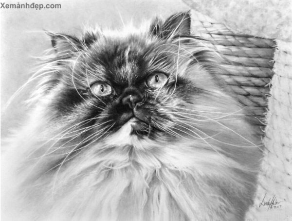 Pencil art photos