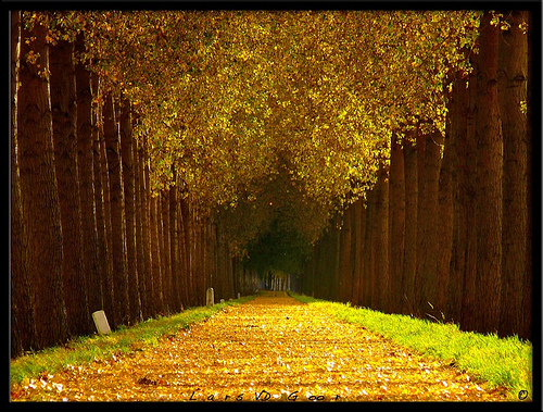 Beautiful road and path photos