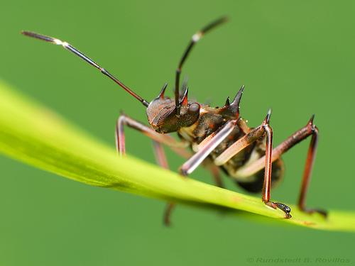 Ảnh côn trùng macro