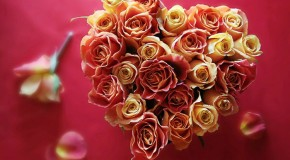 valentine Ảnh Đẹp Hoa Tình Yêu Valentine