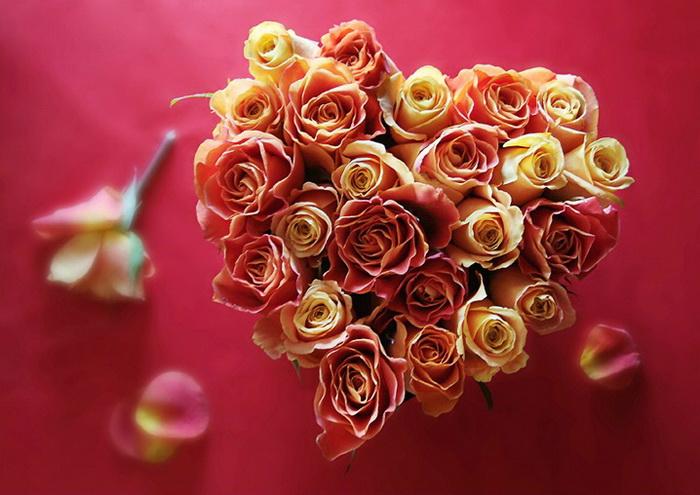 Ảnh hoa valentine