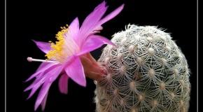 anh hoa dep nhat Ảnh Hoa Đẹp