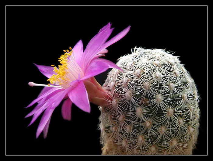 Hoa đẹp tuyển chọn