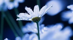 anh hoa dep nhat Ảnh Hoa Đẹp Tuyển Chọn