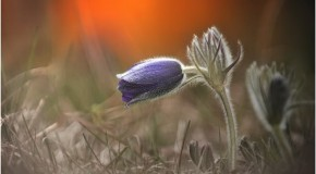 anh hoa dep nhat 20 Ảnh Hoa Đẹp Chọn Lọc