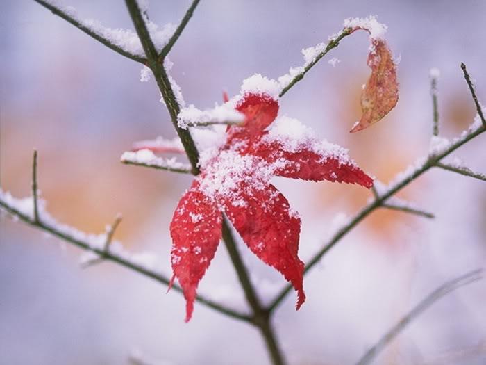 Ảnh đẹp mùa đông
