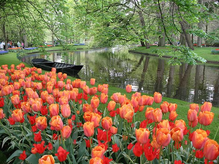 Ảnh đẹp vườn hoa