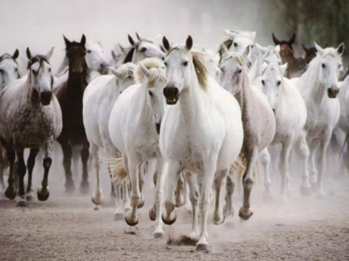 Ảnh ngựa đẹp