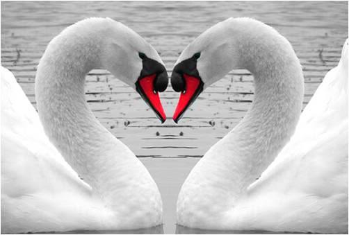 Tình yêu loài chim