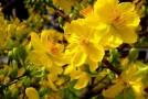 Ảnh Hoa Đẹp Ngày Tết