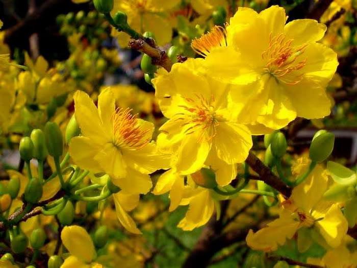 Hoa đẹp ngày tết