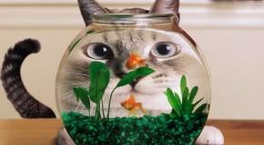 Anh dong vat Ảnh Vui Mèo Xinh