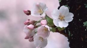 Anh hoa dep Ảnh Đẹp Hoa Mùa Xuân