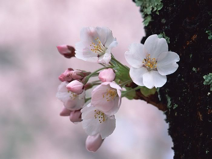 Ảnh đẹp hoa xuân