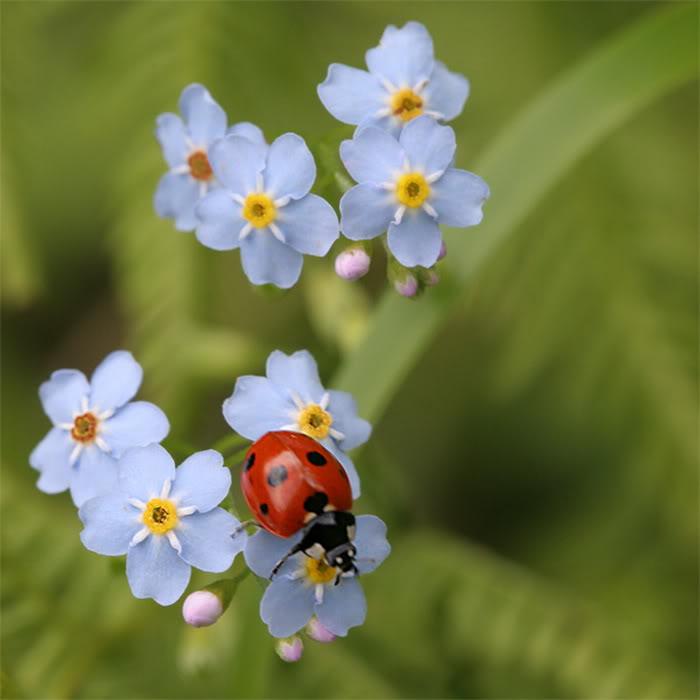 Hoa và côn trùng