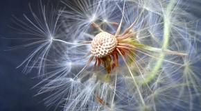 Anh hoa dep Ảnh macro hoa đẹp