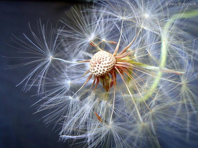 ảnh macro hoa đẹp