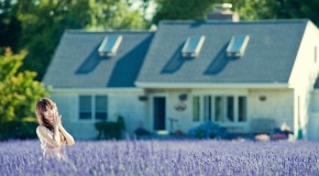 Anh hoa dep Ảnh hoa oải hương Lavender tuyệt đẹp