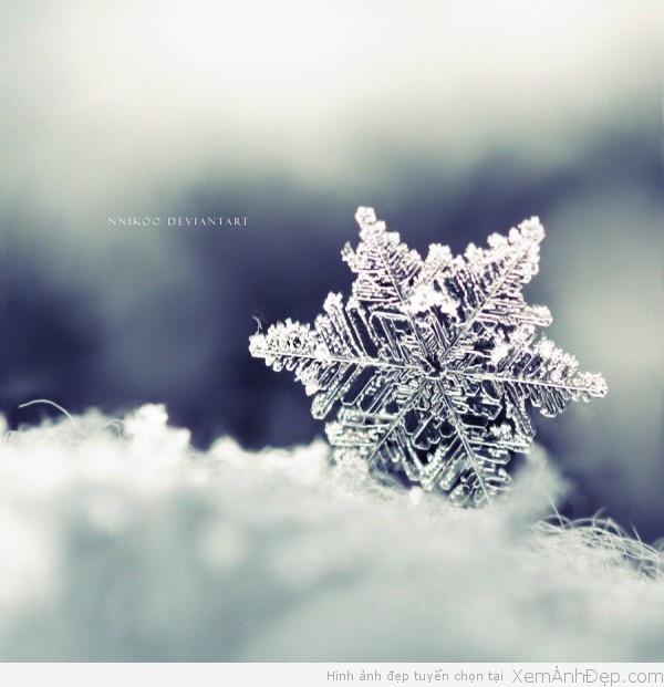 Hình ảnh đẹp bông tuyết, hinh anh dep